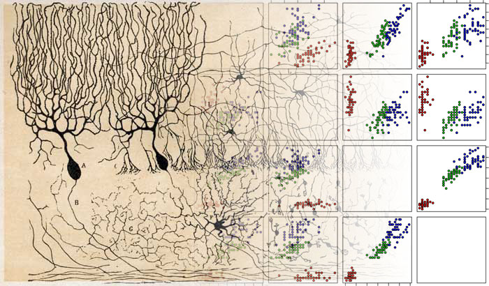 Deep networks can be seen as hierarchical generalized linear models.